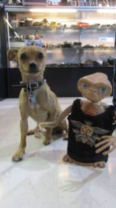 ET appears in most of our photos (he is an avid photo bomber), but he somehow missed the commercial. Here he is with one of our favorite customers, Captain Jack (yes, we're aware he is a dog, but he is a very cool dog!)